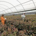 INVESTIGADORA INIA RESALTA FUNCIÓN DE MICROORGANISMOS EN LA AGRICULTURA PARA ALCANZAR PRODUCCIONES SUSTENTABLES